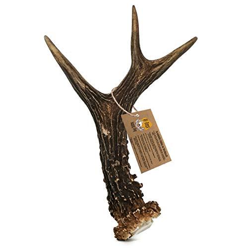 RF - DEER Bois de Chèvre, Cerf   Taille L   Jouets à mâcher naturels pour Chiens   Mâcher des os pour Le Plaisir et Les Soins dentaires   Version Hard