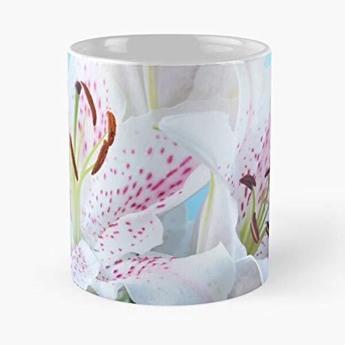 worldbrand Liliums Lilium Hybrid Oriental Lily Flowers Extravaganza Lilies Best 11 oz Kaffeebecher - Nespresso Tassen Kaffee Motive