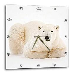 3dRose Canada, Manitoba, Churchill. Polar Bear on Hudson Bay ice. - Wall Clocks (DPP_329756_2)