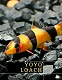 Yoyo Loach: Care Guide fоr thе Beautiful аnd Communal Creatures (English Edition)