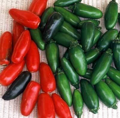 30 Samen von Serrano Chili - Peperoni