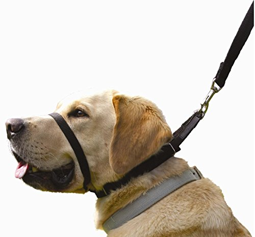 Canny Collar - The Collar for Dog Training and Walking