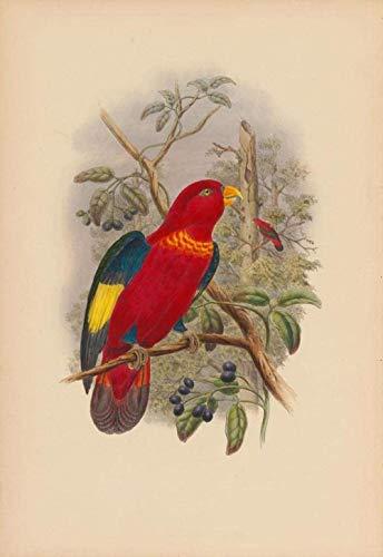 Jkykpp Digitale olieverfschilderij knutselen vogel rode tekening met groene bladeren takken decoratie huis geschenken 40 x 50 cm