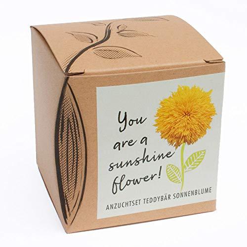"""Geschenk-Anzuchtset\""""Sunshine Flower\"""" - Teddybär Sonnenblume"""