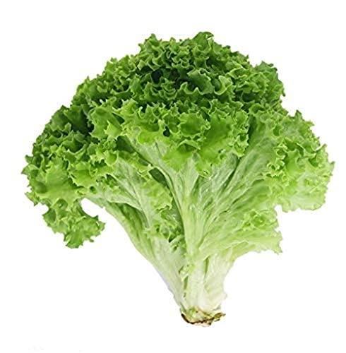200 Stuks Sla Zaden Non-GMO Heirloom Grote Groene Bladeren Golvende Eigenaardige Vorm Krul Aan De Rand Populaire…