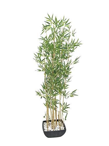 Europalms - Planta de bambú (en Cuenco, 150 cm), Color Verde