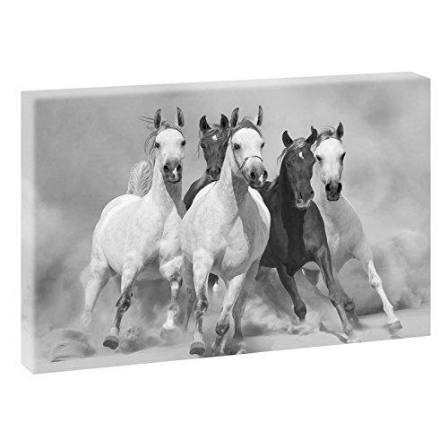Cuadro panorámico de caballos salvajes 2 en formato XXL, impresión artística sobre...