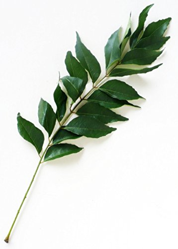 Ambrosial - Parfum du ciel Feuille de curry Huile essentielle Murraya koenigz 100% naturelle
