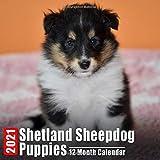 Mini Calendar 2021 Shetland Sheepdog Puppies: Cute Sheepdog Puppy Photos Monthly Small Calendar With Inspirational Quotes each Month