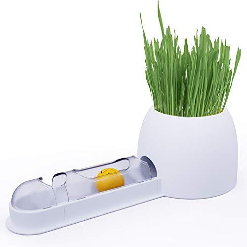 Besudo Katzengras Schale mit DIY Spielschiene - Interaktives Katzenspielzeug mit Katzengras Schale/Katzengras Set - Ideales Katzenzuebhör als Grastopf - (Samen Nicht im Lieferumfang)