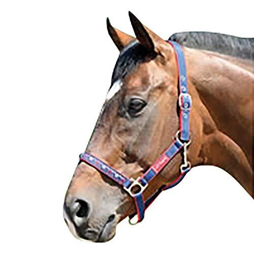 Harry Hall Chester Pantalon d/équitation pour Fille mod/èle