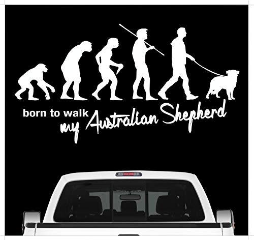 Siviwonder Australian Shepherd Aussie Evolution Autoaufkleber Hund Aufkleber Folie Farbe Weiß, Größe 45cm