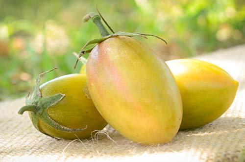 blush tomato seeds - 5