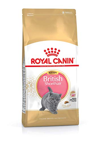 Royal Canin KITTEN British Shorthair Katzenfutter 10 kg, 1er Pack (1 x 10 kg)