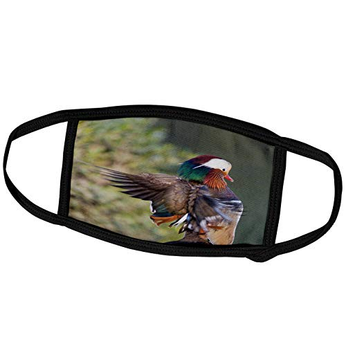 3dRose China, Beijing, Male Mandarin Duck Flapping Wings - AS07 AGA0007. - Face Covers (fc_132352_2)