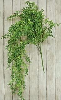 Lemon Verbana Beauty Hanging Bush Spring Green Country Primitive Floral Décor