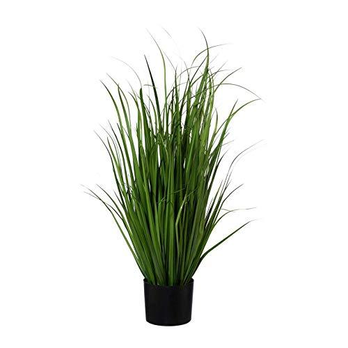 Pflanzen Kölle Miscanthus, grün, ca. 95 cm, im einfachen Kunststofftopf 19 x 14,5 cm