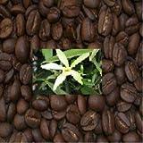 SABOREATE Y CAFE THE FLAVOUR SHOP Café 100% Arábica en grano Aromatizado Sabor Vainilla 1Kg