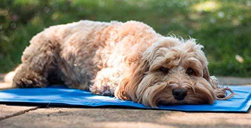 GS1 HONDURAS Alfombrilla refrescante para Mascotas Grandes Perro Gato Autoenfriamiento Manta de Dormir Fresco Perros/Gatos Auto 40x50cm Antideslizante