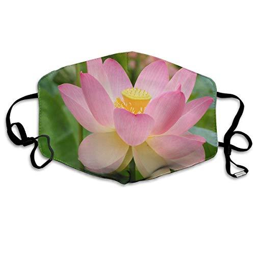 Lotus On Pinterest Wiederverwendbare Waschbare Gesichtsschutzhülle für den persönlichen Schutz