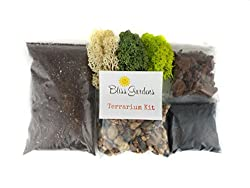 Bliss Gardens Terrarium DIY Kit - Best Terrarium Kits