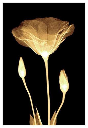 CCZWVH Flores abstractas Flores amarillas claras Pinturas de lona en negro Groud Arte de pared Pósteres Imágenes de arte moderno para la decoración de la sala de estar 20x28 pulgadas x2 Sin Marco