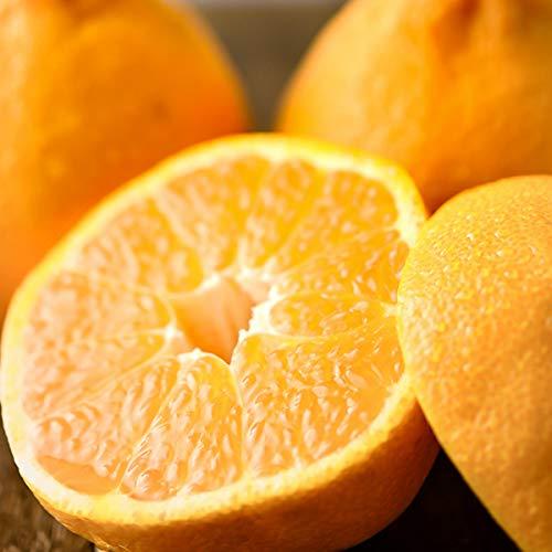 国産 甘夏 10kg(共選 ご家庭用) 柑橘類 みかん ミカン 蜜柑 果物 フルーツ お取り寄せ