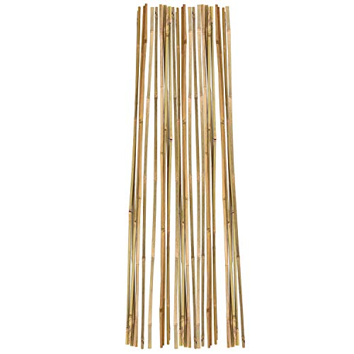 1000 bamboo stakes - 8
