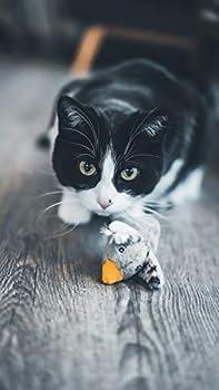 Aime Jouet pour Chat Réversible Peluche 2 en 1 Souris/Oiseau Jouet Amusant pour Chat Jeu de Chasse