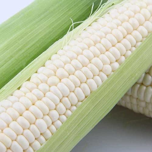 10 piezas de semillas de maíz blanco cultivo de grano natural no transgénico para granjas al aire...
