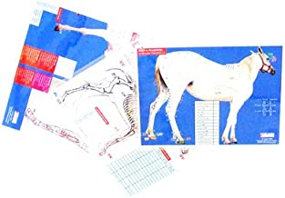 Equine Multiple Channel Charts