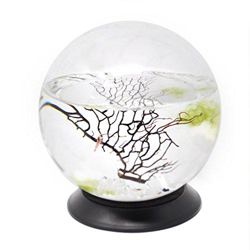 EcoSphere Closed Aquatic Ecosystem, Medium Sphere, with Turntable Base