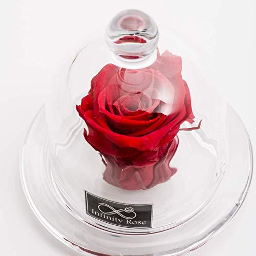 D-COVER Rose Eternelle Rouge Naturelle sous Une Cloche en...