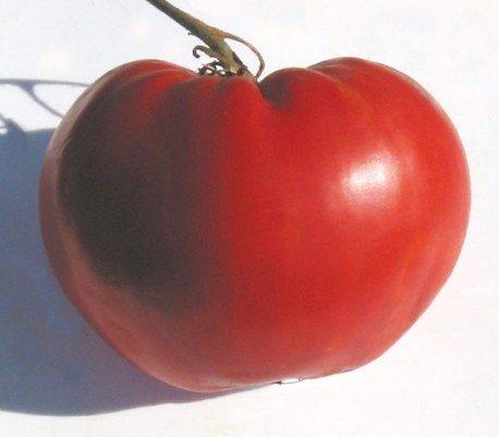 5 paquets de 25 graines Graines coeur tomate australienne de Thieneman