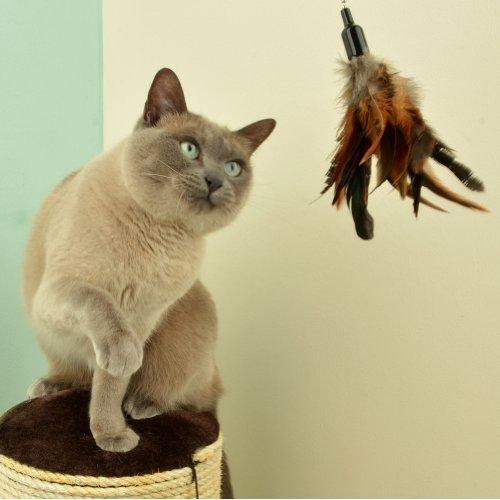 The Natural Pet Company Interaktives Katzenspielzeug mit Federn, inkl. 2 Ersatzfedern - 4