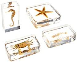 American Educational 4 Piece Molded Plastic Sea Life Specimen Set