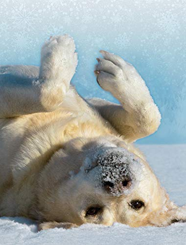 'Topsy-Turvy' Yellow Lab - Boxed Wildlife Christmas Cards - 5 5/8 x 7 3/8 Inches - 15 Heavyweight Cards and 16 Envelopes
