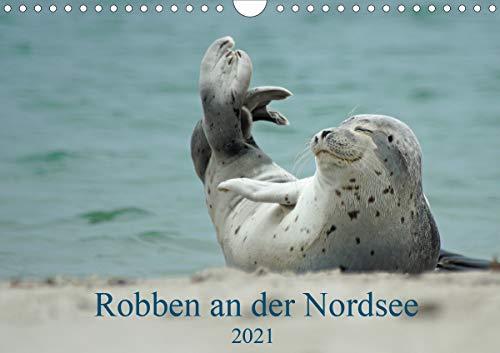 Robben an der Nordsee (Wandkalender 2021 DIN A4 quer)