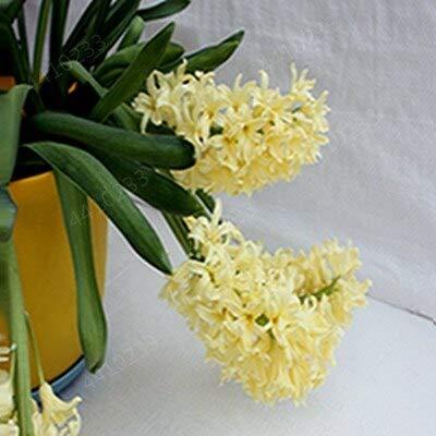 Hot 50 PC/Bag Bonsai Wasser-Hyazinthe Blumen Pflanzen Neuer Live-Wasser-Hyazinthe Schwimmteich Aquarium Fissidens fontanus: p