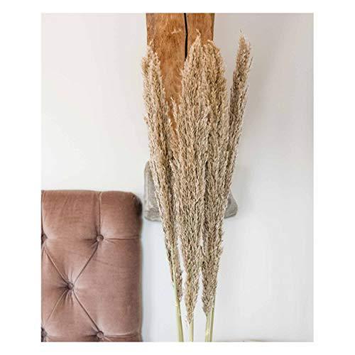 Lilianfeld® Arundo Gräser getrocknet 5er Set XL - Natürlich getrocknetes Pampasgras beige/taupe - Hohe Qualität - Made in Italy - Interior-Trend 2020