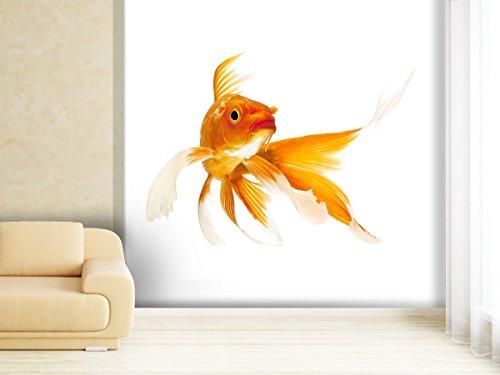 Muurafbeelding Koi Fish in verschillende maten - als papier of vliesbehang selecteerbaar 280x270cm