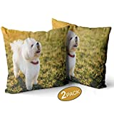 Nine City Cute Little Bichon Frise Dog,Pillow Case Pack of 2 Sofa Bed Throw Cushion Cover Decoration 20' X 20'