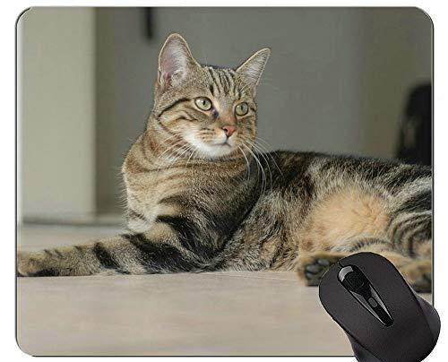 Mousepads und Flying Shorthair Cat Mouse-Pads Kurzfristiger Geschenk-Bedarf?