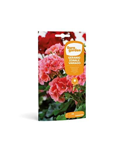 Eurogarden - Semillas de Flores (Geranio Zonale Variado)