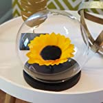 preserved sunflower in a glass dome, real forever rose, forever sunflower, roses, eternal sunflower, preserved sunflower arrangement