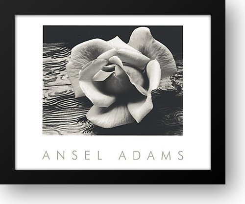 Rose and Driftwood 24x20 Framed Art Print by Adams, Ansel