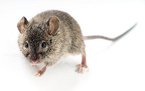 ISOTRONIC Anti Rats Souris Ultrason Répulsif Electronique Produit Anti Nuisible Dispositif...