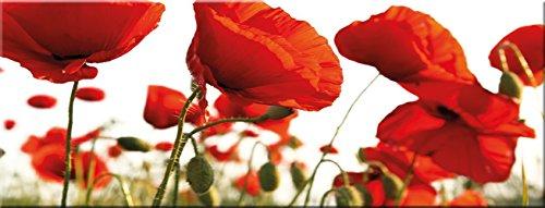 artissimo, Glasbild, 80x30cm, AG1966A, Red Poppy, rote Mohn-Blumen, Bild aus Glas, Moderne Wanddekoration aus Glas, Wandbild Wohnzimmer modern