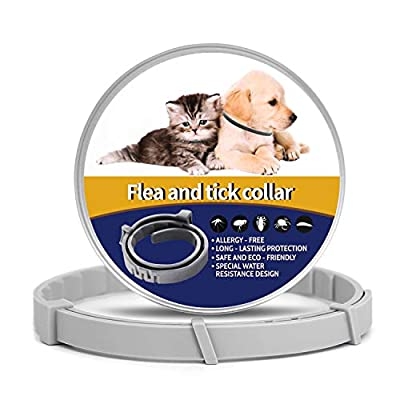 MIUSSAA 1 Pack Pet Collar Kitten for 8-Month Validity Period Adjustable Gray Waterproof for Dogs and Cats