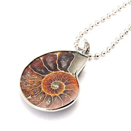 Joya Gift Charm Handmade Natural Conch Fossil Ammonite by Silver covid 19 (Fossil Leather Necklace coronavirus)